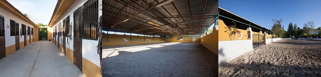 Los mejores cuidados y boxes para caballos en Málaga