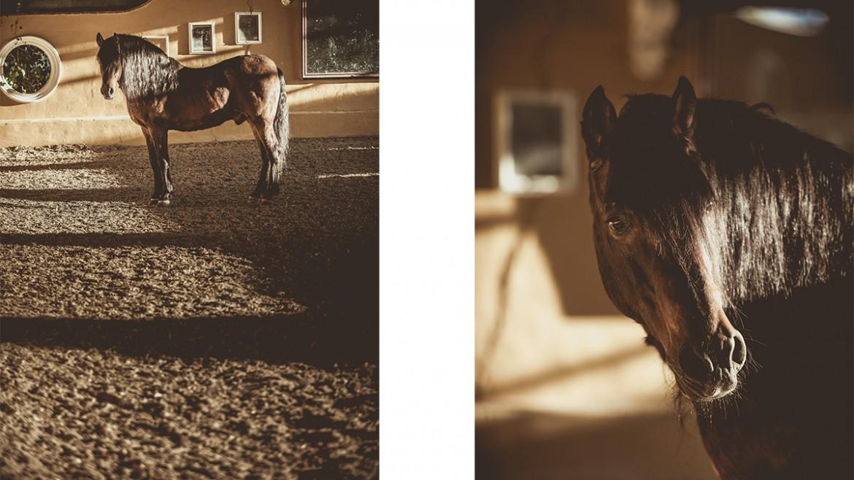 Caballo de pura raza española 18