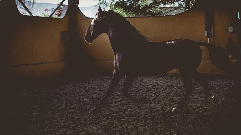 Equinos Artequus