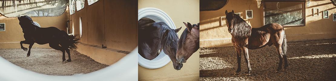monta de caballos y mantenimiento