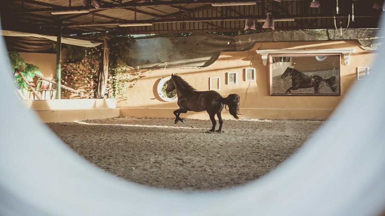 Caballo de pura raza española 31