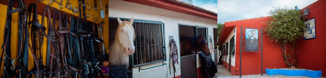 Servicios de Pupilaje de caballos